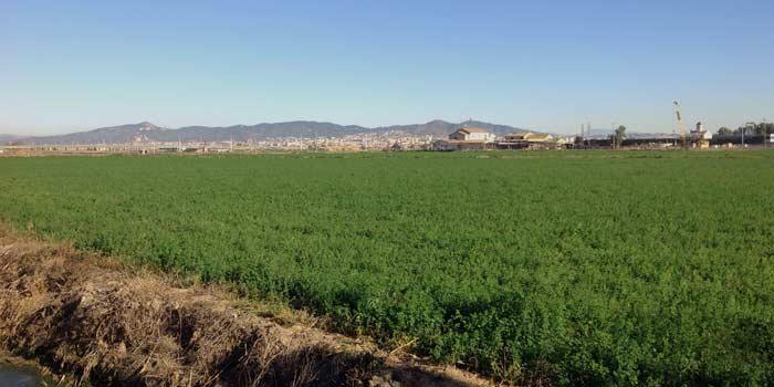 terreno agricola en venta arequipa