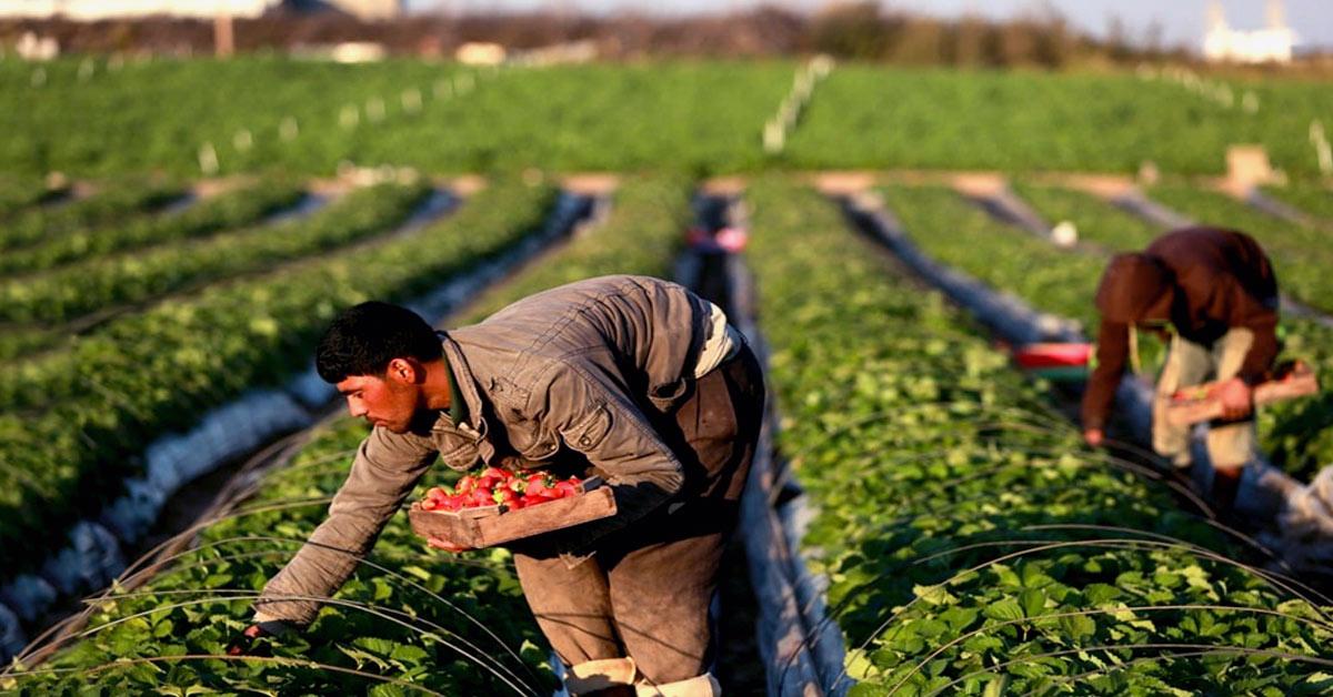 Unidades de medición presentes en la Agricultura del Perú